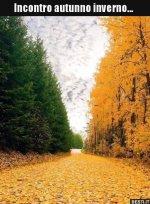 autunno inverno.jpg