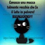 FB_IMG_1623318000922.jpg